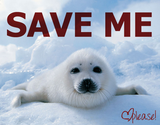 Image result for end the seal hunt