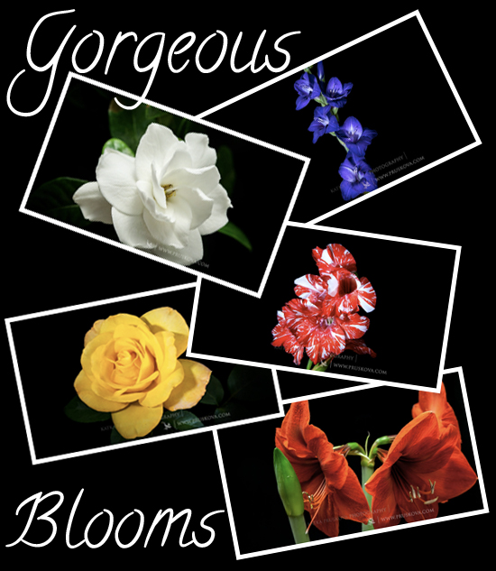 gorgeousblooms