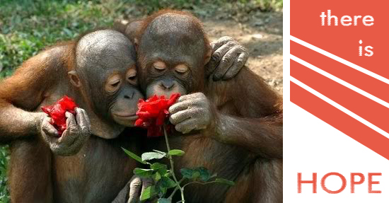 hope_orangutans