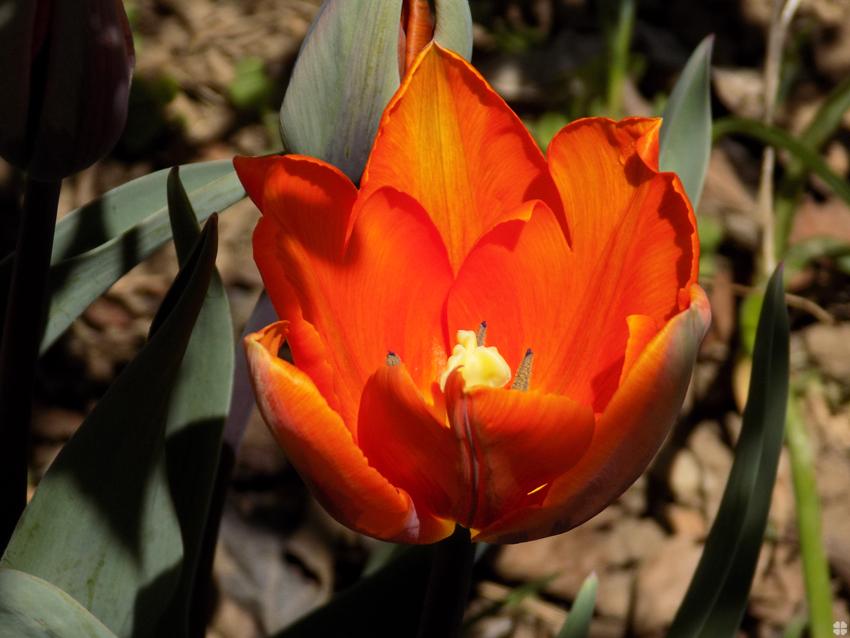 springflowers_3